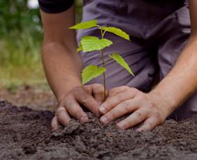Aplinkos projektavimas, apželdinimas, priežiūra