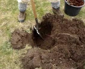 Aplinkos tvarkymas. Pastovi priežiūra Mums nėra mažų darbų !