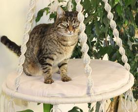 Exclusiviniai hamakai katėms