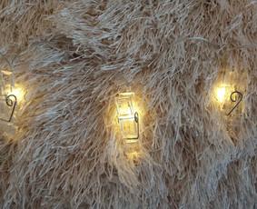 Iš lempos - lempučių nuoma