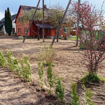 Atliekame vejos pjovimo, įrengimo darbus / Marius / Darbų pavyzdys ID 14450
