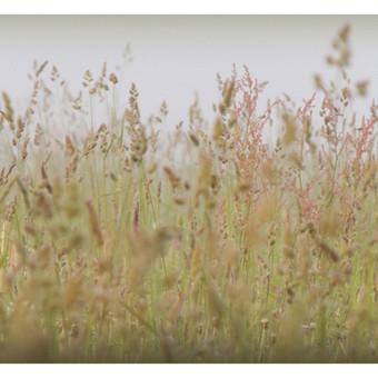 """""""The Mist in Meadow"""" (40X22cm) © Tatjana Iljina"""