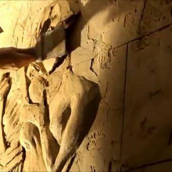 Interjero dekoravimas, bareljefai, freskos, sienų skulptūros / Lina / Darbų pavyzdys ID 421487