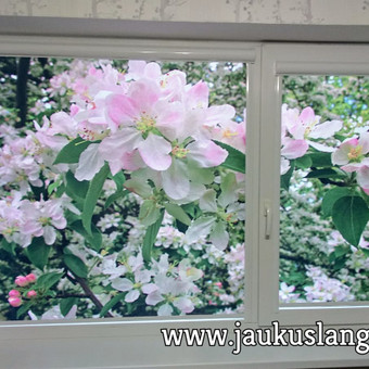 Nepriekaištinga kokybė  už dar mažesnę kainą / Jaukūs langai / Darbų pavyzdys ID 480953