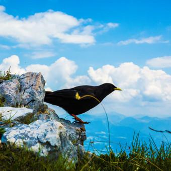 Gamta neapkenčia dirbtinio blizgesio, ir visų geriausiai klesti tai, kas nesudarkyta jokio dirbtinumo.