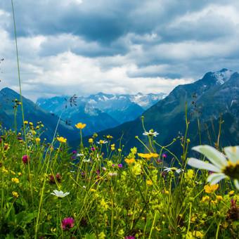 Gero tobulo žmogaus ir pačios žydinčios gamtos ilgesys verčia mus pamilti ir žemę, ir žmones..