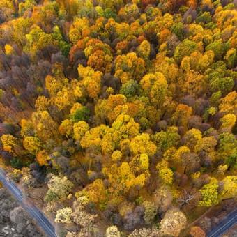 Foto - Video Jums! Dirbame nuo žemės ir iš oro! Parašyk Mums / Oro Vizija / Darbų pavyzdys ID 518967