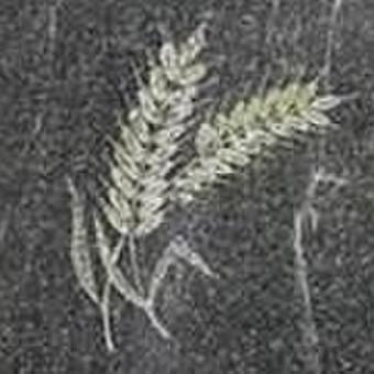 Paminklai, antkapiai, granito plokštės, kapų tvarkymas / TVARKINGA KAPAVIETĖ / Darbų pavyzdys ID 524747