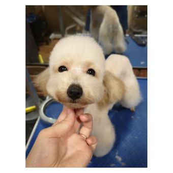 Reda- VizguVizgu šunų kirpykla / Reda / Darbų pavyzdys ID 554749