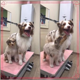 """Šuniukų kirpykla """"Juoda nosytė"""" / Laura Rinkevičienė / Darbų pavyzdys ID 574483"""