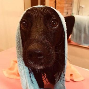 """Šuniukų kirpykla """"Juoda nosytė"""" / Laura Rinkevičienė / Darbų pavyzdys ID 574485"""