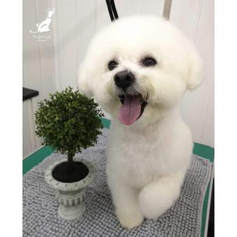 Reda- VizguVizgu šunų kirpykla / Reda / Darbų pavyzdys ID 622463