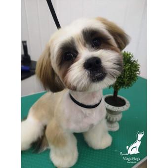 Reda- VizguVizgu šunų kirpykla / Reda / Darbų pavyzdys ID 622465