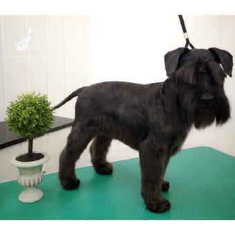 Reda- VizguVizgu šunų kirpykla / Reda / Darbų pavyzdys ID 622469