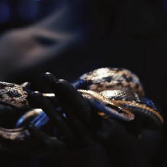 Filmavimas / Darius Meilus / Darbų pavyzdys ID 624213