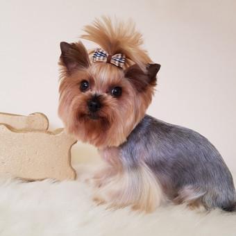 Šuniukų kirpykla Gilė / Meilė Griauzdienė / Darbų pavyzdys ID 662749