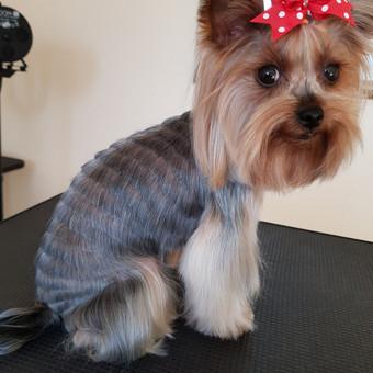 Šuniukų kirpykla Gilė / Meilė Griauzdienė / Darbų pavyzdys ID 662739