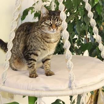 Hamakas katėms