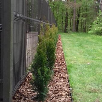 Plastikinio vejos bortelio montavimas- 3,5 euro už metrą. Šią kainą sudaro darbas ir medžiagos (bortelis, smeigės)