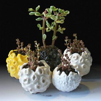 Mini vazonėliai