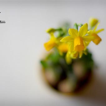 Happiness Photography / Gintarė Liakšaitė / Darbų pavyzdys ID 95577