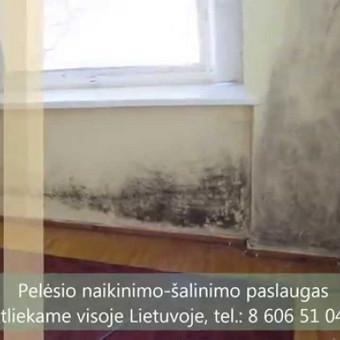 Pelėsio naikinimo-šalinimo paslaugos Vilniuje ir Kaune. Darbus atliekame visoje Lietuvoje! Tel.: +37060651043