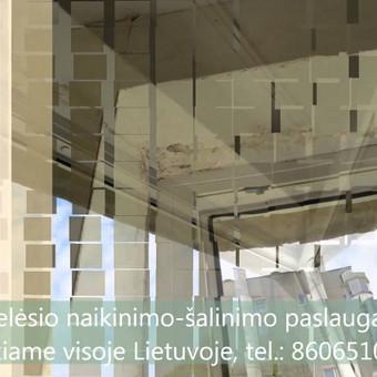 Pelėsio naikinimas-šalinimas Vilniuje ir Kaune. Darbus atliekame visoje Lietuvoje! Tel.: +37060651043