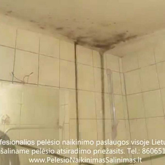 Pelėsio naikinimo-šalinimo paslaugos iš vonios Vilniuje ir Kaune. Priežaščių likvidavimas. Darbus atliekame visoje Lietuvoje! Tel.: +37060651043