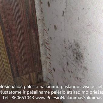 Pelėsio naikinimas-šalinimas Vilniuje ir Kaune. Priežaščių likvidavimas. Darbus atliekame visoje Lietuvoje! Tel.: +37060651043