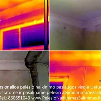 Termoviziniai tyrimai ir pelėsio priežaščių nustatimas ir konsultavimas kaip tinkamai pašalinti priežastys. Profesionalios pelėsio naikinimo šalinimo paslaugos Vilniuje. Tel.: +37060651043