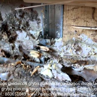 """Medžio grybo """"Trobagrybio"""" naikinimas-šalinimas rastineme mediniame names, bei priežaščių šalinimas ir likvidavimas. Darbus atliekame visoje Lietuvoje! Tel.: +37060651043"""