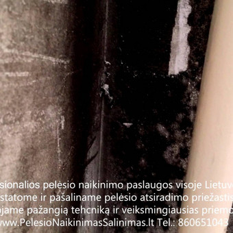 Profesionalios pelesio naikinimo šalinimo paslaugos Kaune. Darbus atliekame visoje Lietuvoje! Tel.: +37060651043