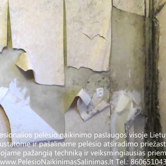 Pelėsio naikinimo šalinimo paslaugos Vilniuje. Darbus atliekame visoje Lietuvoje! Tel.: +37060651043