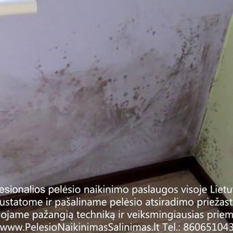 Pelėsio naikinimo šalinimo paslaugos Kaune. Darbus atliekame visoje Lietuvoje! Tel.: +37060651043