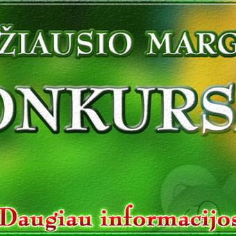 Interneto svetainių kūrimas Kaune / Martynas Leščinskas / Darbų pavyzdys ID 110503