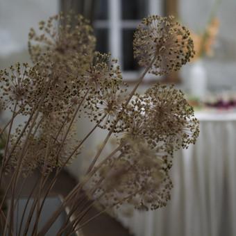Fotografė Šiauliuose / Irina Bielenienė / Darbų pavyzdys ID 202223