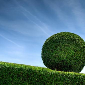 Gyvatvoriu, krūmų, medžių genėjimas. Šis darbas ypatingai svarbus pavasarį, tik nuo jo priklauso kaip atrodys ar duos didelį derlių tam tikras augalas.