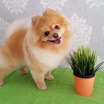"""Šunų ir kačių kirpykla """"Mon Pet"""" / Alicija / Darbų pavyzdys ID 262069"""