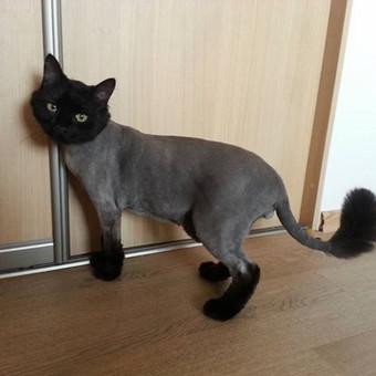"""Šunų ir kačių kirpykla """"Mon Pet"""" / Alicija / Darbų pavyzdys ID 262071"""
