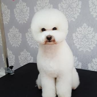 """Šunų ir kačių kirpykla """"Mon Pet"""" / Alicija / Darbų pavyzdys ID 262079"""