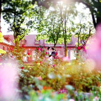 Vestuvių fotografavimas Vilniuje, aukštaitijoje / Donata Vitkienė / Darbų pavyzdys ID 368773