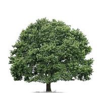 Medžio Formos